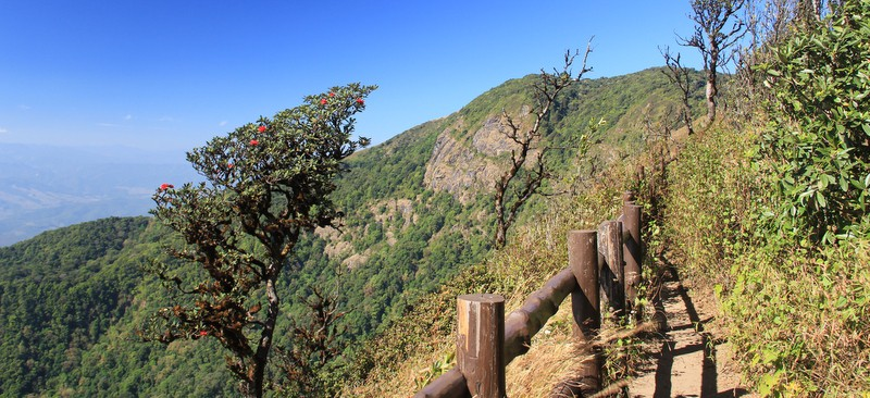 Chiang Mai - 2 hour trek in Doi Ithanon Park